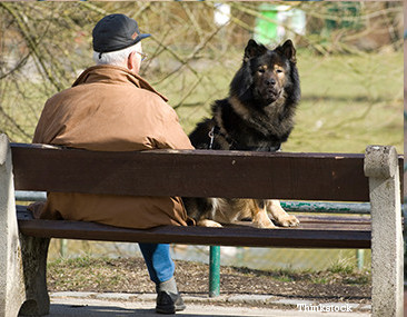 7 Good Reasons to Get a Pet at Older Age, and 7 Not To...